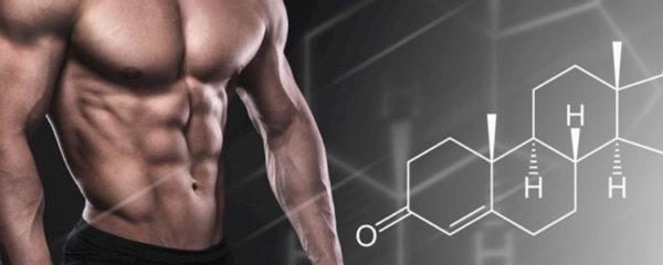 testostérone